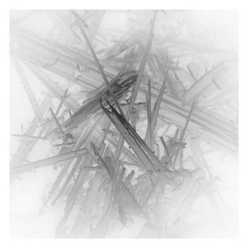 Asbestfaser unter dem Mikroskop