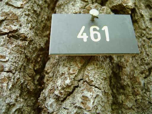 Strassenbaum mit Nummer
