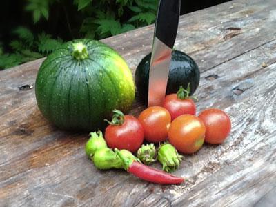 erstes Gemüse aus dem eigenen Garten