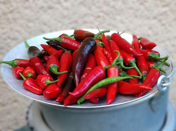rote Chilis auf einem Teller